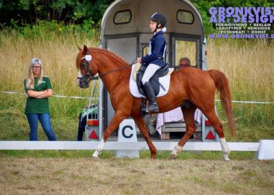 Arbottna Horse Show _DSC_0014