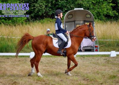 Arbottna Horse Show _DSC_0016